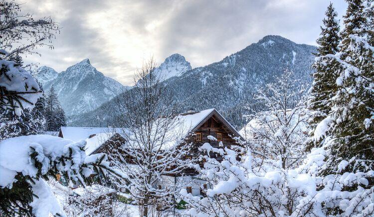 Hinterstoder Winter Wald (© TVB Pyhrn-Priel/Bruno Sulzbacher)