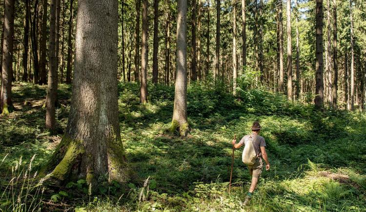 Waldschule Almtal Waldwanderung (© Historicum Scharnstein, Foto Monika Löff)