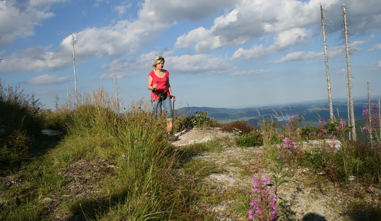 Eine Dame mit rotem T-Shirt wandert mit Walkingstöcken auf einem Pfad mit Weitblick in die Sommerlandschaft. (© Tourismusverband Ferienregion Böhmerwald)