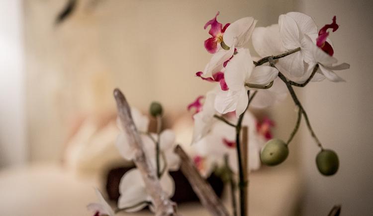 Orchidee. (© Karin Lohberger)