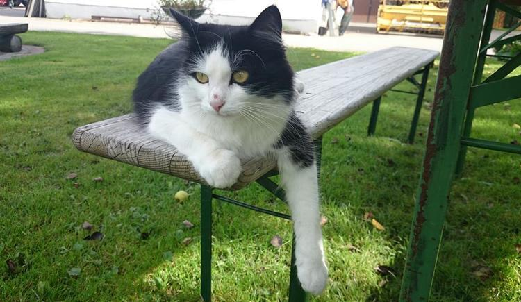 Katze (© Privat)