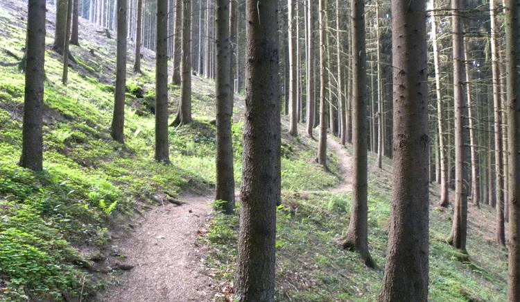 Besonderheiten entdecken (© Ferienregion Böhmerwald)