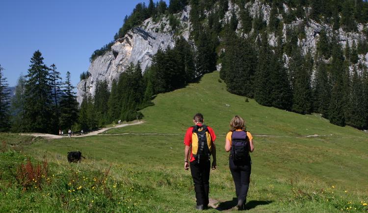 Familienfreundliche Wanderung über ca. 1,5 Stunden zur Hütteneckalm, ausgehend vom Berghof Predigstuhl. (© Ferienregion Dachstein Salzkammergut / Viorel Munteanu)