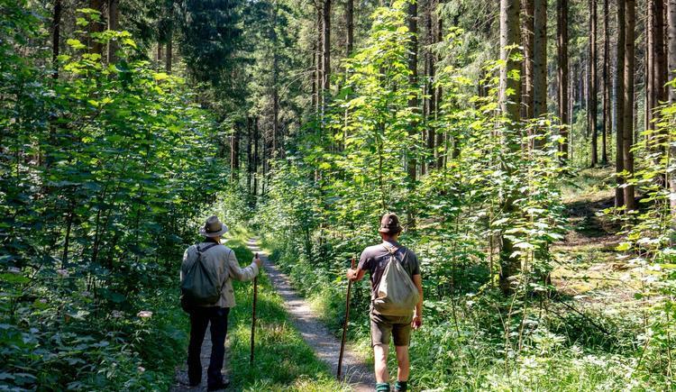 Waldschule Almtal auf dem richtigen Pfad (© Historicum Scharnstein, Foto Monika Löff)