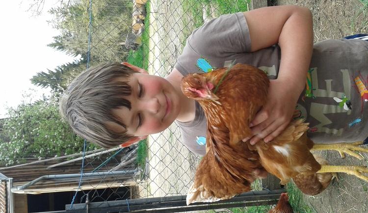 auch die Hühner wollen gestreichelt werden