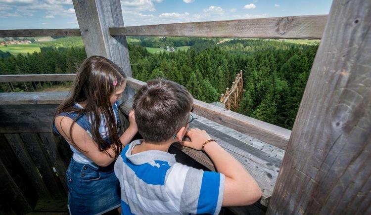 Ausblick vom 40m Turm (© Baumkronenweg Kopfing, OÖ)