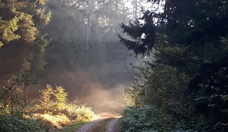Herbstwandern im Pfarrwald (© Lang Johann)