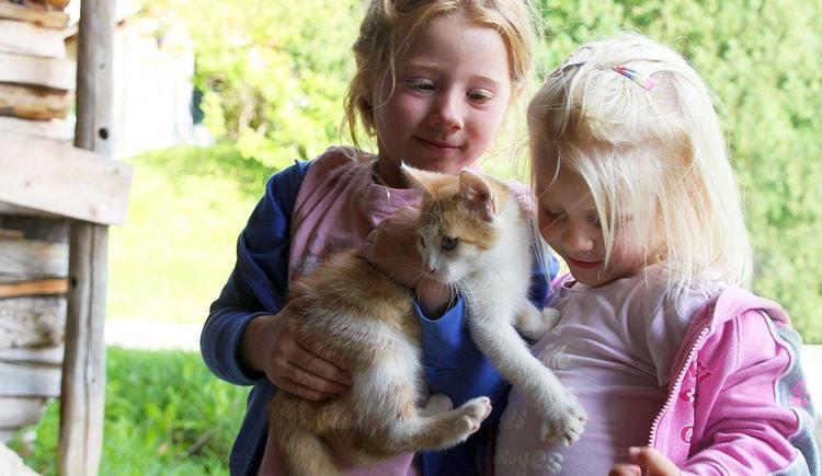 Katzen auf unserem Bauernhof