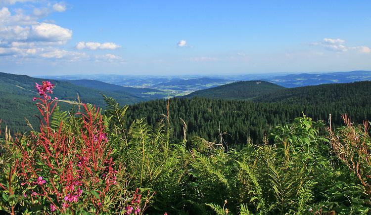 Weitblick über eine Wiese in die Waldlandschaft des Mühlviertels. (© Tourismusverband Ferienregion Böhmerwald)
