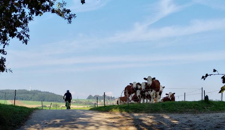 Rennrad-Tour durchs Innviertel - flach. (© Innviertel-Tourismus)