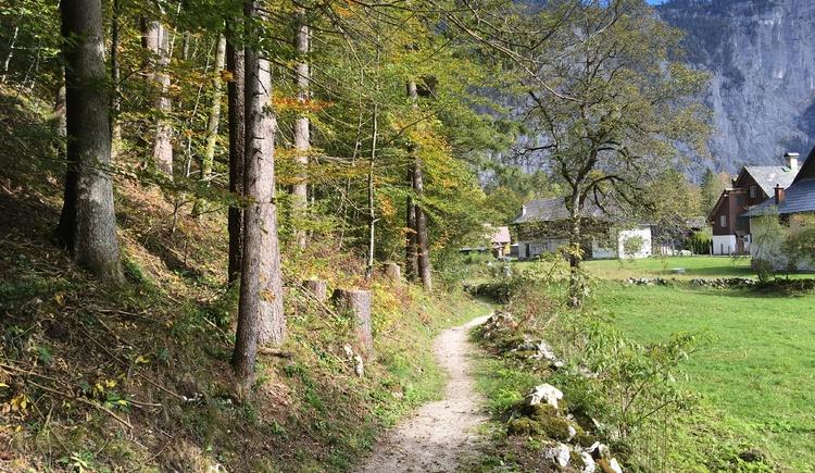 Das letzte Stück des Höhenweges führt uns am Waldrand hinter den Häusern der Ortschaft Reith in Obertraun vorbei. (© Manuela Elmer)