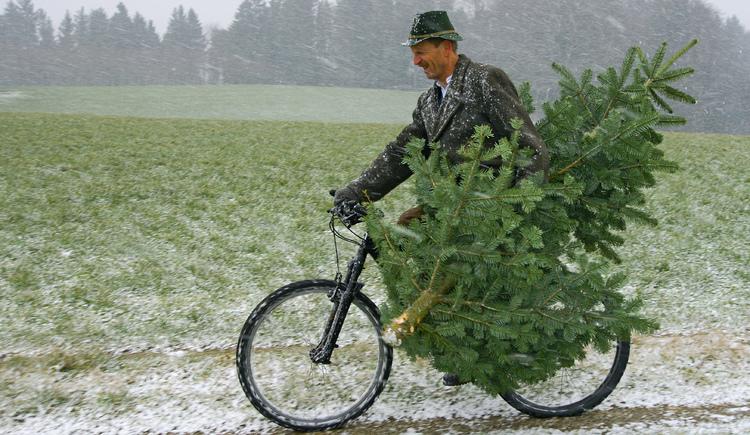 Zu sehen ist ein Mann auf einem Fahrrad mit einem Christbaum. (© Alois Litzlbauer)