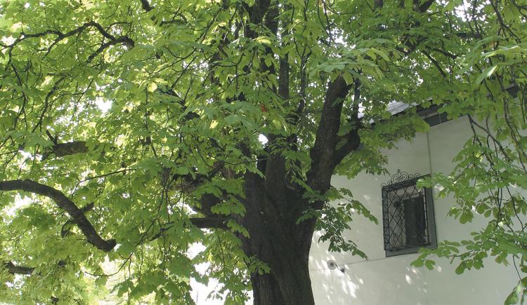 Im gemütlichen Gastgarten ist der alte Kastanienbaum ein großzügiger Schattenspender. (© Landhotel Agathawirt)
