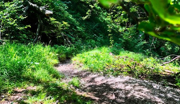Trail bzw. Schiebestrecke in Richtung Offensee (© Salzkammergut / Harald Maier)
