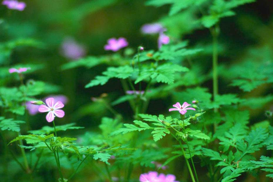 Flowers Beschreibung