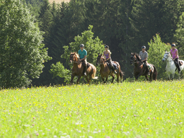 Weekend of Horseback Riding Experiences in the Realm of Horses