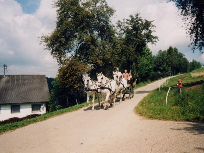 Pferdehof Löffler
