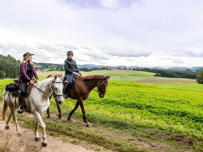 Pferdereich Mühlviertler Alm