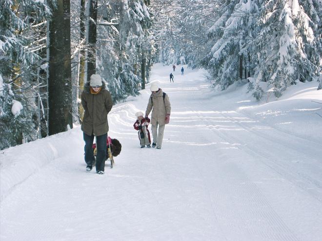 Winterwanderweg: Böhmerwaldtrail