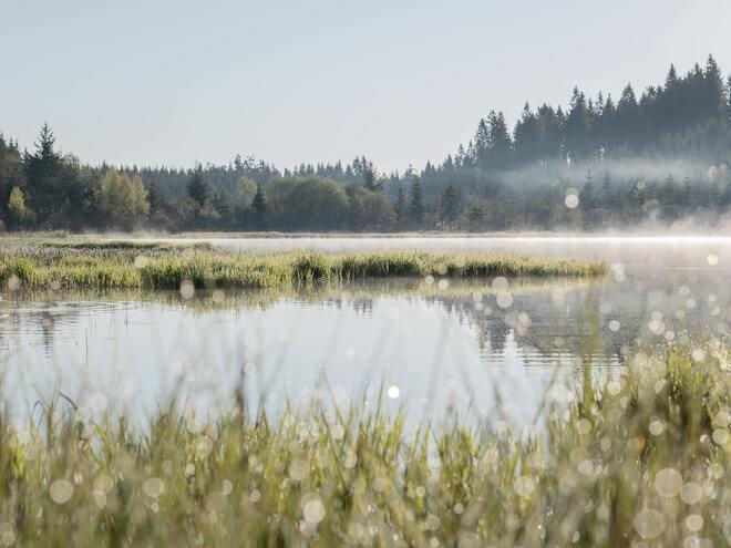 Naturschutzgebiet Tanner Moor