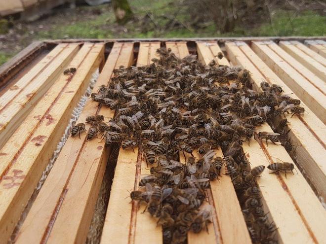 Tag des offenen Bienenstocks am Bienenhof Attersee