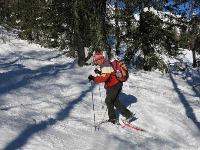 Discover the larch and pine forest with snowshoes