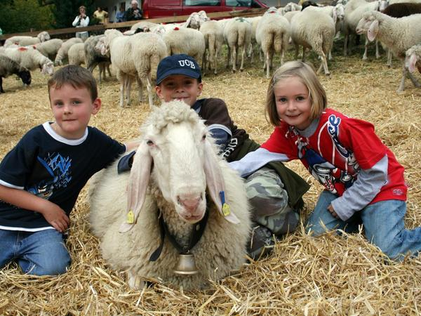 Transhumance of Sheep and Horse in Finkenberg and Marc Pircher