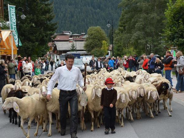 Gerlos Sheep Drive