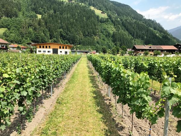 1. Tiroler Buschenschank bei uns im Zillertal sowie Jahrgangspräsentation der Zi