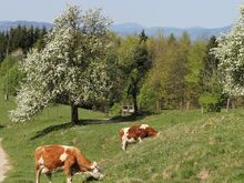 Bauernhof  Leitner (Zocherl)