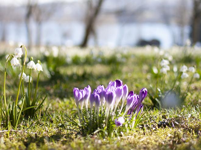 Springtime-offer