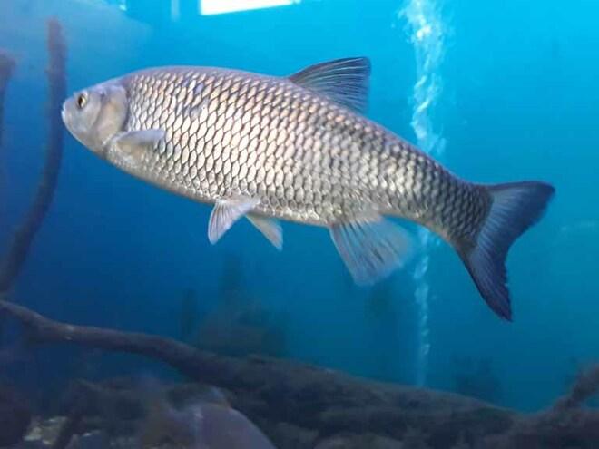 Attersee-Aquarium beim Musikpavillon