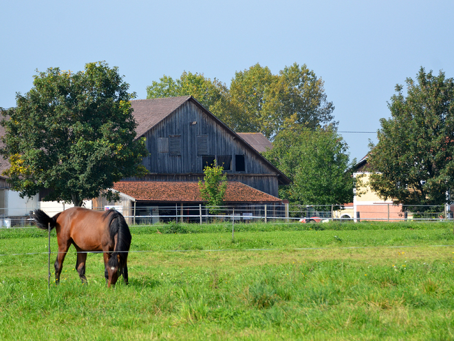 Weidenthal Riding & Breeding Farm