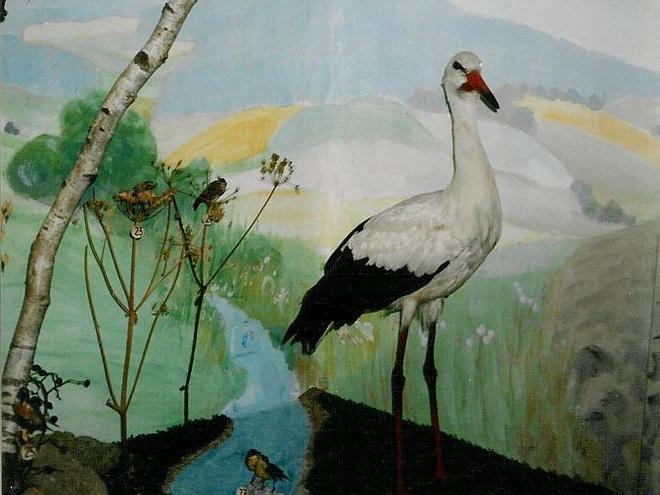 Vogelwelt im Kulturhaus Aigen-Schlägl