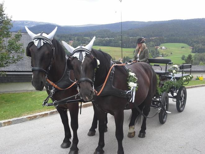 Pferdeschlitten- und Kutschfahrten