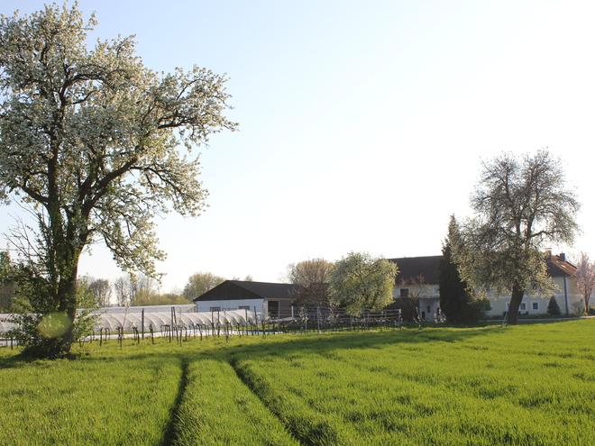 Hof Frühling