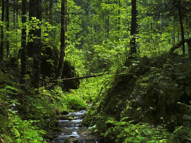Dachsteinhöhlenpfad