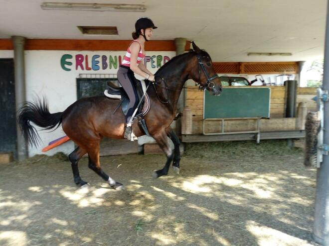 Horse adventure for children at the Hochegg farm