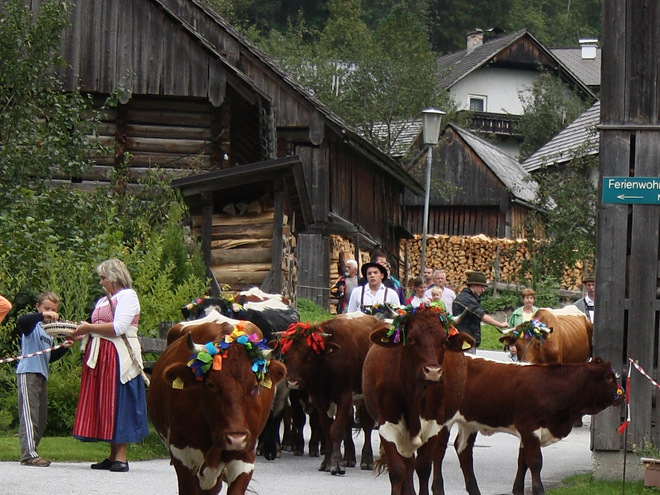 Almabtriebsfest - Moosalm