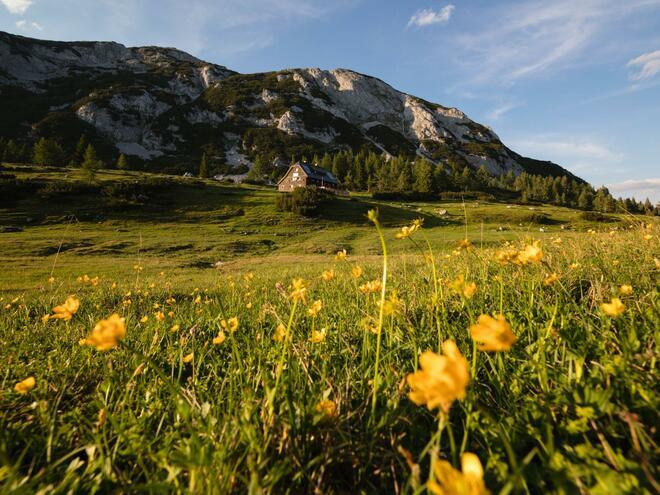 Almwirtschaft Grazerhütte