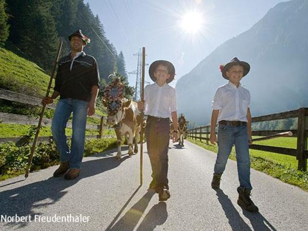 Cattle Drive in the center of Mayrhofen