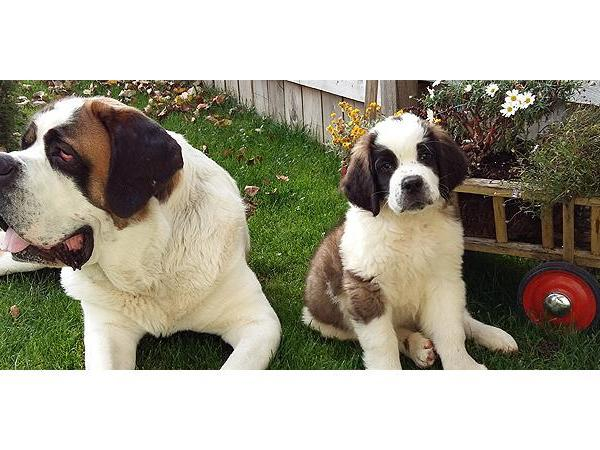 Hundewanderung - Training - Kräuterkunde