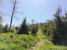 10,8 km: Gipfel-Ge(h)nussweg