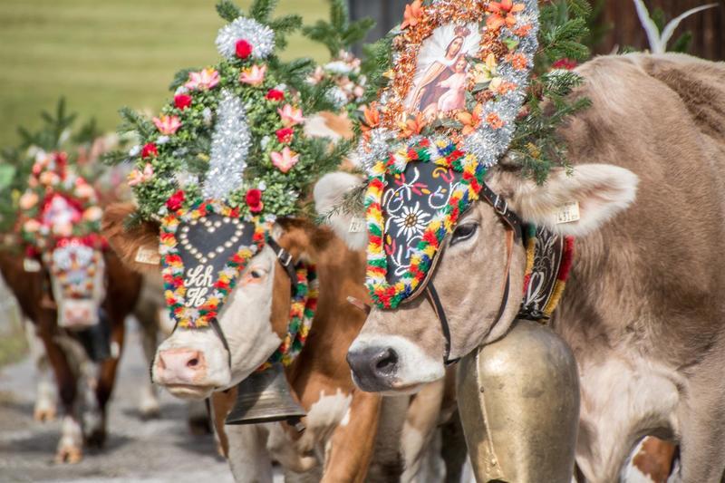 Big cattle drive festival in Zell am Ziller
