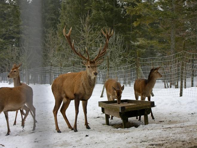 Winter Aktiv Package im Almtal