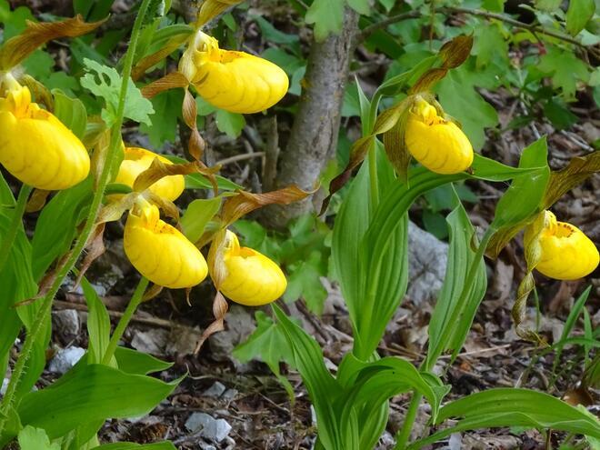 Alpengarten Bad Aussee und Libellenweg