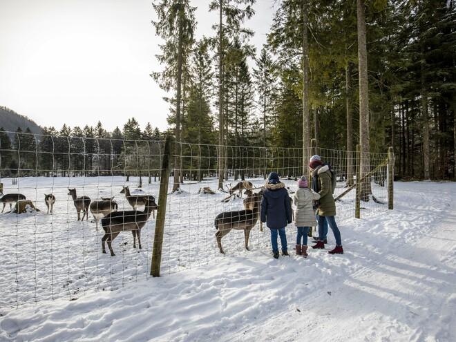 Der Braunbär im Winter Cumberland Wildpark Grünau