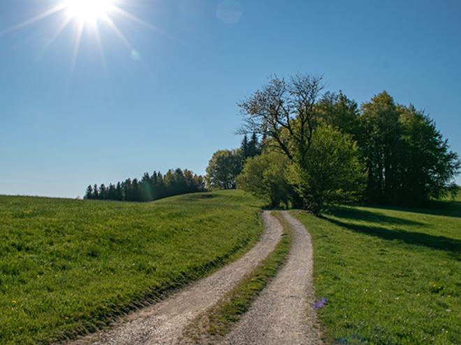 Alp meadow trail