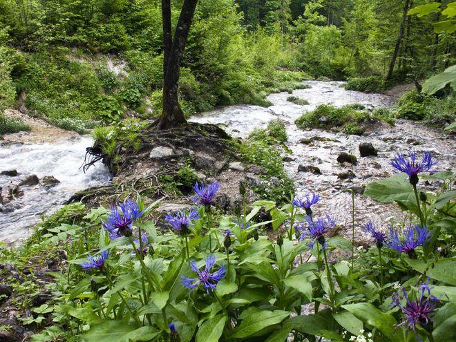 Baumschlagerreith – Steyr Ursprung