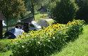 Camping Au an der Donau, Sonnenblumen | © Gerhard Ebner